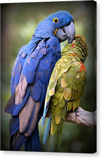 Parrots Canvas Print - Birds Of A Feather by Stephen Stookey