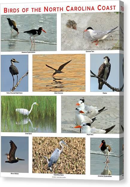 Birds Of North Carolina Coast Canvas Print