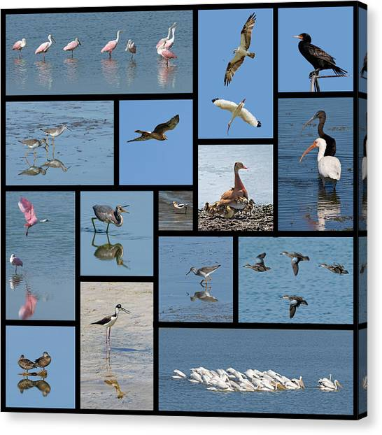 Birds Of The Click Ponds Canvas Print