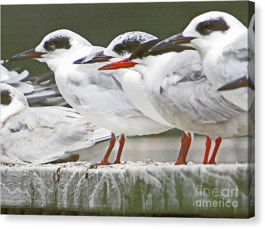 Birds On A Ledge Canvas Print