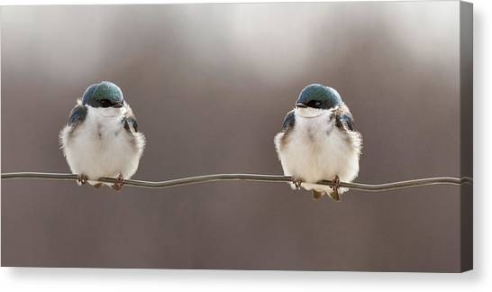 Winged Canvas Print - Birds On A Wire by Lucie Gagnon