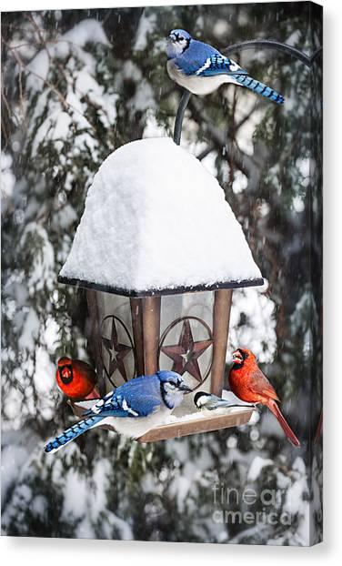Bluejays Canvas Print - Birds On Bird Feeder In Winter by Elena Elisseeva