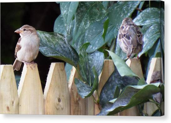 Canvas Print - Birds On The Fence  by Lisa Roy