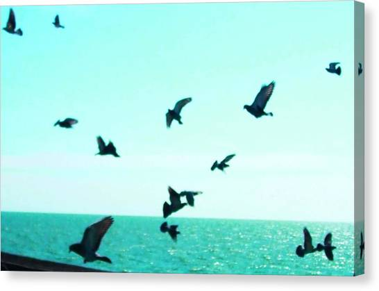 South Carolina Canvas Print - Birds Over The Ocean by Meagan Johnson