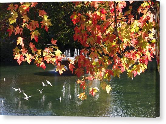 Birds Over Water Canvas Print by Jocelyne Choquette