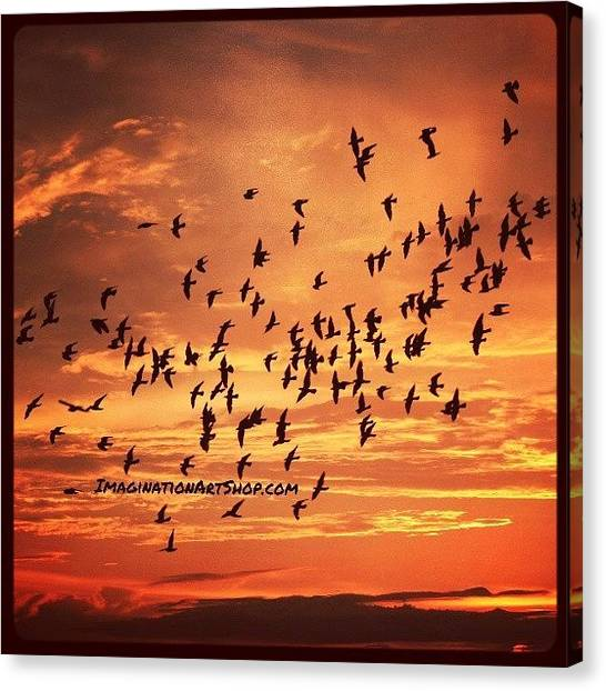 Birds Canvas Print - #birds #photography #sunset #fly by Mandy Shupp