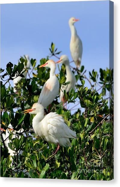 Birds Quartet Canvas Print