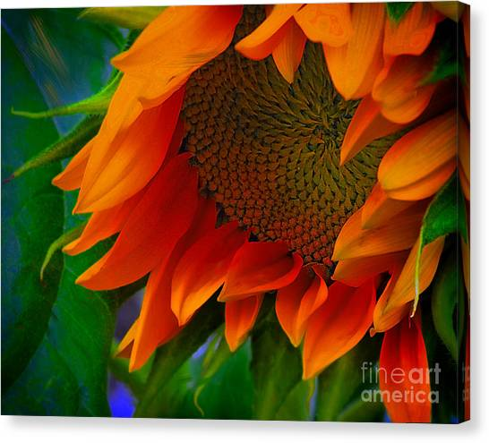 Birth Of A Sunflower Canvas Print