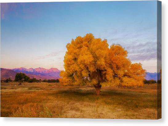 Bishop Sunrise Canvas Print