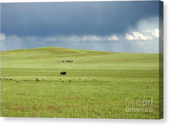 1009a Bison And Riders Canvas Print
