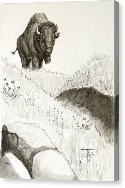 Bison Approach Canvas Print
