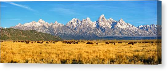 Bison Beneath The Tetons Limited Edition Panorama Canvas Print