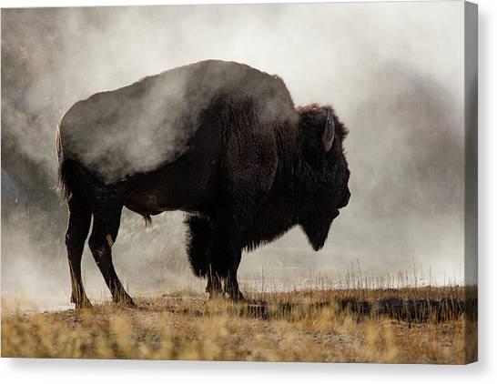 Wyoming Canvas Print - Bison In Mist, Upper Geyser Basin by Adam Jones