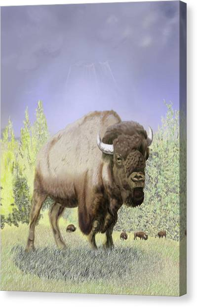 Bison On The Range Canvas Print