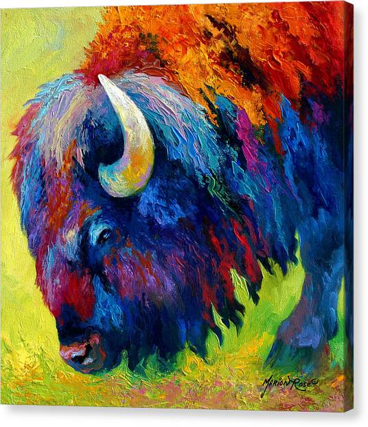 Bison Canvas Print - Bison Portrait II by Marion Rose