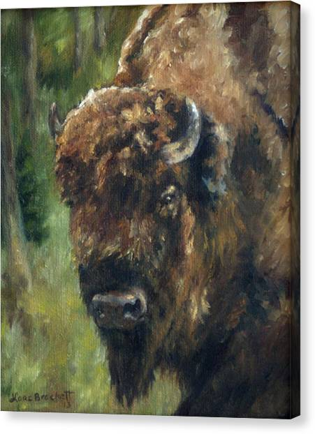 Bison Study - Zero Three Canvas Print