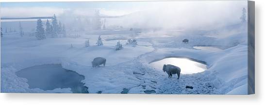Snow Melt Canvas Print - Bison West Thumb Geyser Basin by Panoramic Images