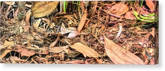 Poisonous Snakes Canvas Print - Bitis Gabonica by JC Findley