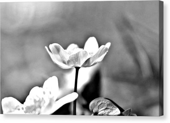 Canvas Print featuring the photograph Black And White Beauty by Candice Trimble