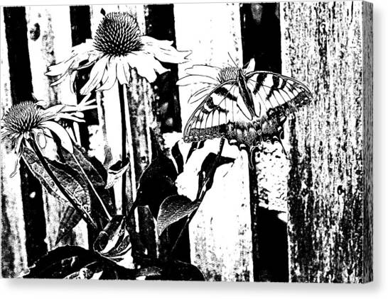 Black And White Beauty Canvas Print