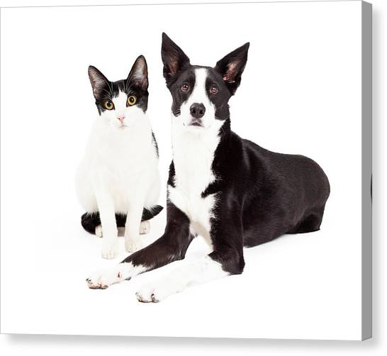 Border Collies Canvas Print - Black And White Cat And Dog by Susan Schmitz