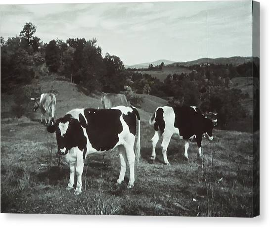 Horizontal Image Canvas Print - Black And White Cows by Joan Reese