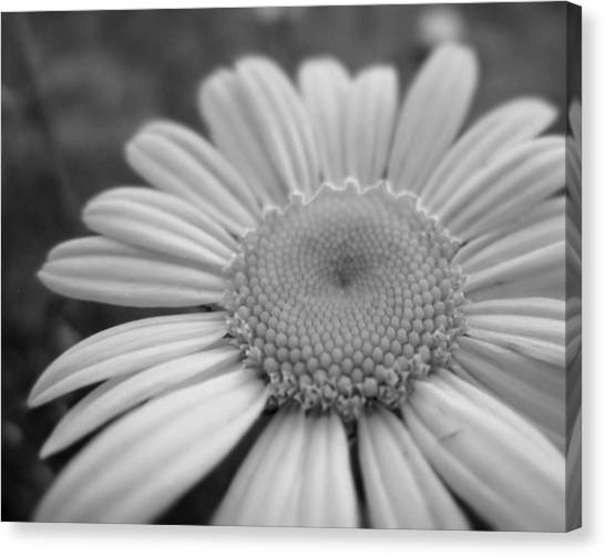 Black And White Daisy Canvas Print