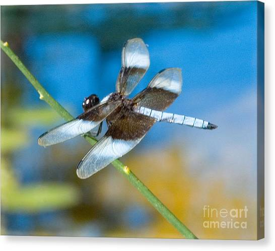 Canvas Print featuring the photograph Black And White Dragonfly by Mae Wertz