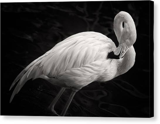 Flamingos Canvas Print - Black And White Flamingo by Adam Romanowicz
