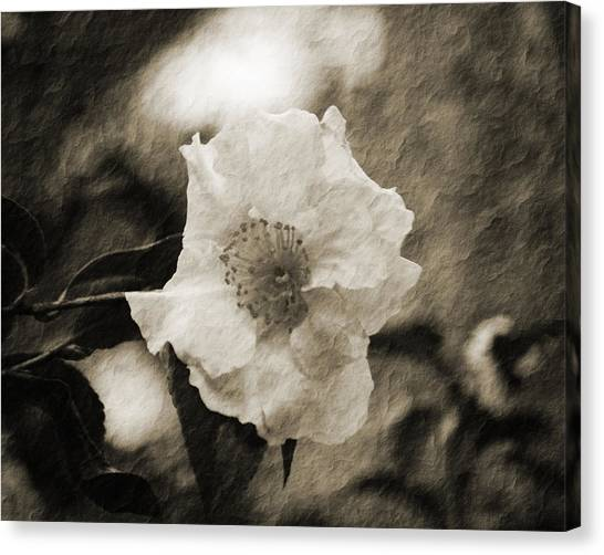 Black And White Flower With Texture Canvas Print