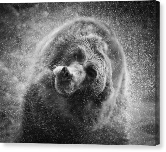 Black And White Grizzly Canvas Print