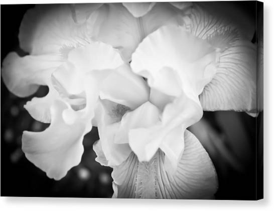 Black And White Hibiscus Canvas Print