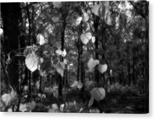 Black And White Leaves Canvas Print