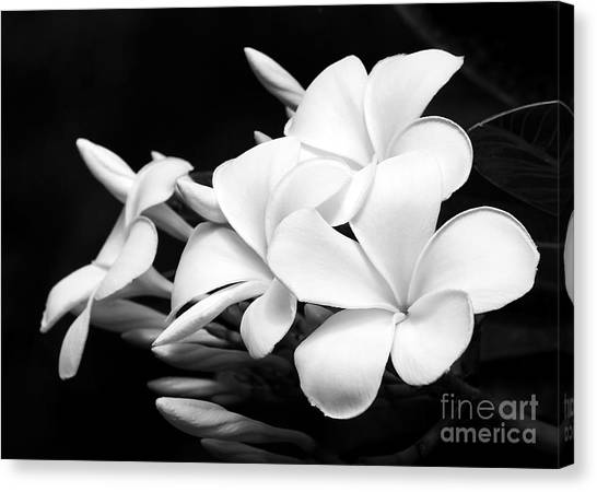 Black And White Lightning Canvas Print