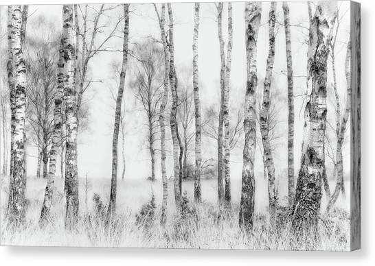 Tree Trunks Canvas Print - Black And White by Nel Talen