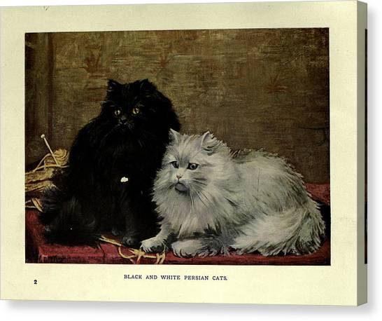 Manx Cats Canvas Print - Black And White Persian Cats by Philip Ralley