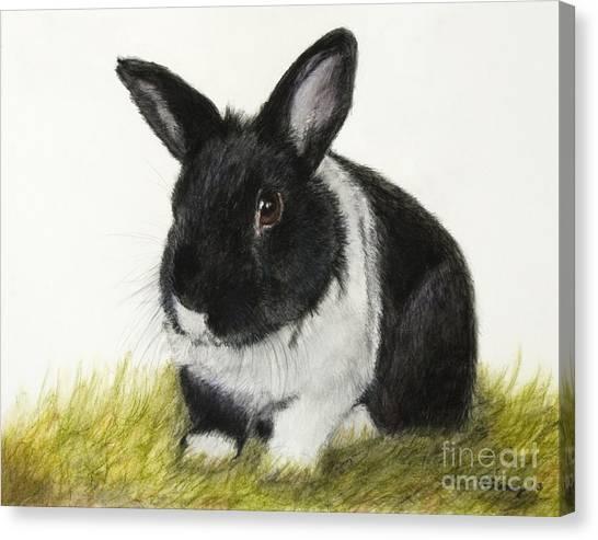 Black And White Pet Rabbit Canvas Print