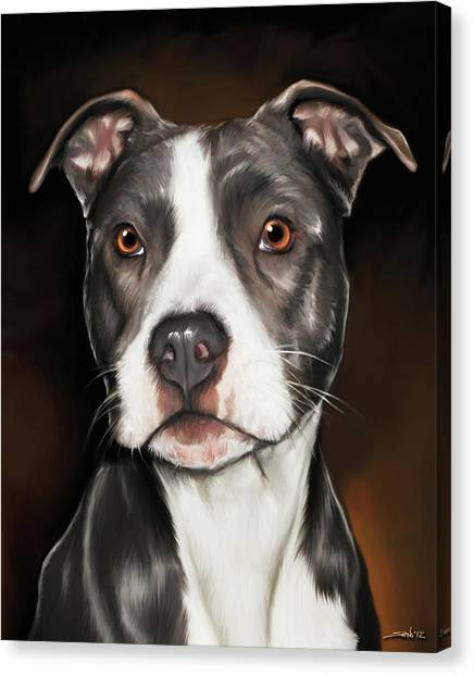 Black And White Pit Bull Terrier Canvas Print