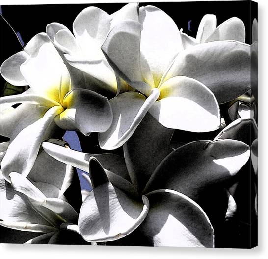 Black And White Plumeria Canvas Print