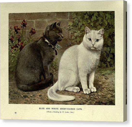 Manx Cats Canvas Print - Black And White Short-haired Cats by W Luker Jr