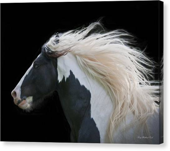 White Horse Canvas Print - Black And White Study IIi by Terry Kirkland Cook