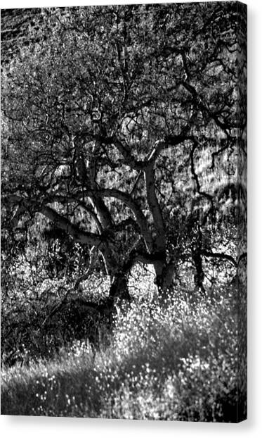 Black And White Trees Canvas Print