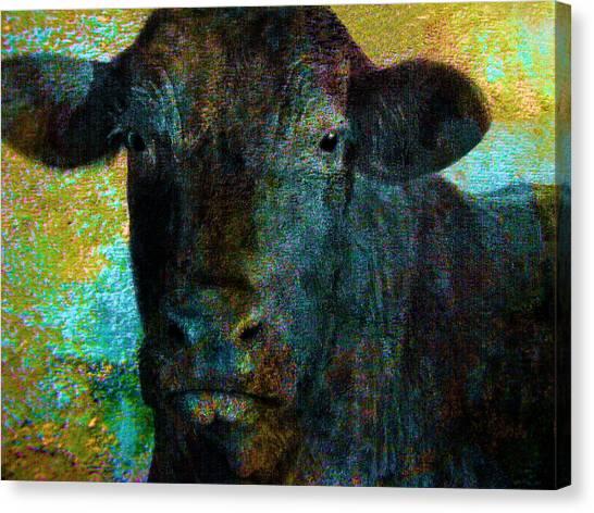 Black Angus Canvas Print