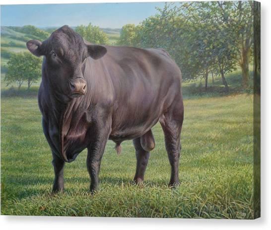 Black Angus Bull 2 Canvas Print
