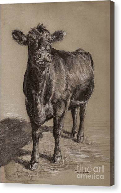 Cow Canvas Print - Black Angus Cow 1 by Nicole Troup