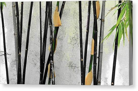 Black Bamboo #2 Sarasota Canvas Print