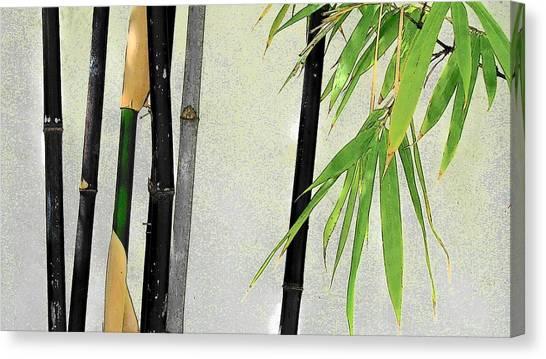 Black Bamboo Sarasota IIi Canvas Print