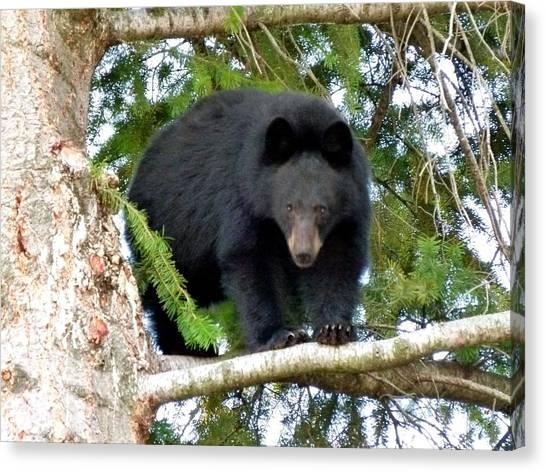 Bear Claws Canvas Print - Black Bear 2 by Will Borden