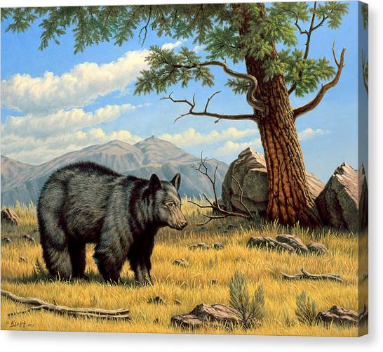 Black Bears Canvas Print - Black Bear Above Lamar by Paul Krapf