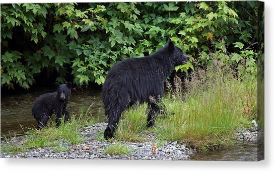 Black Bear And Cub Canvas Print